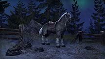 5500mount_whitemanehorse_rawv1_sm